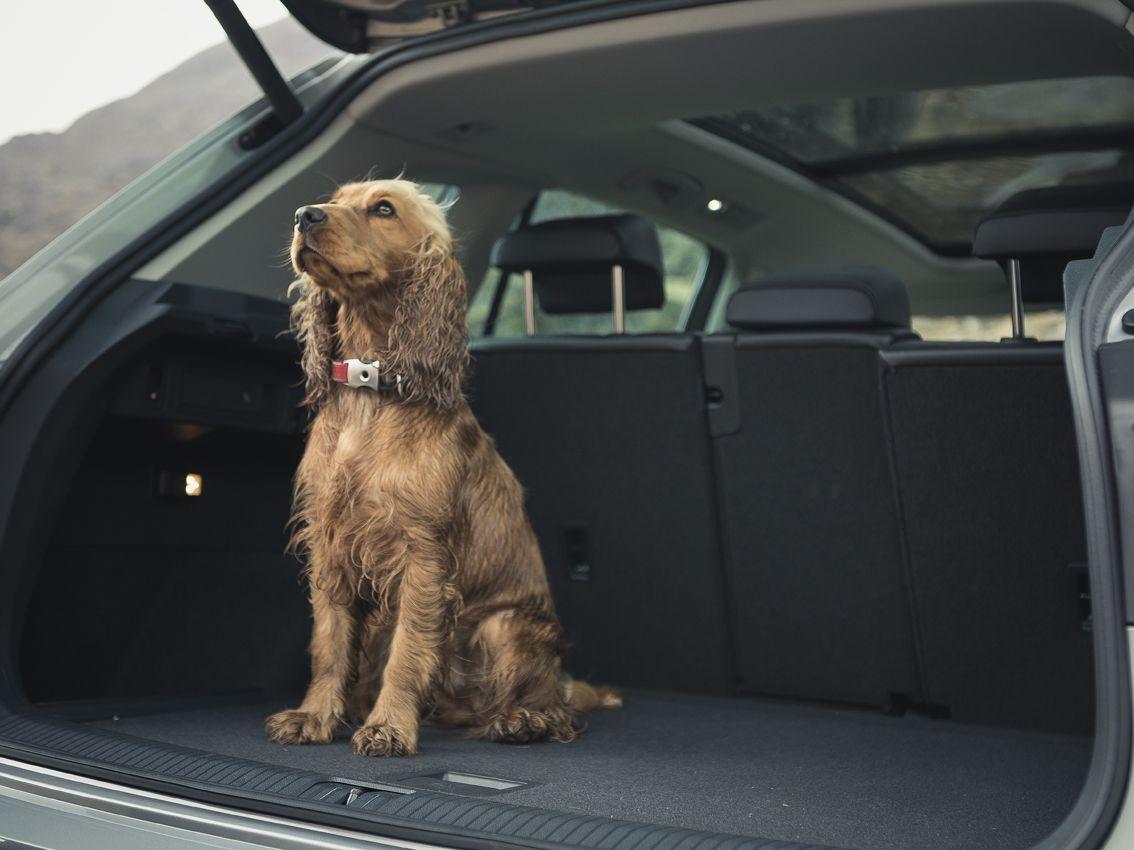 Tu mascota en el coche: consejos para un viaje tranquilo y seguro