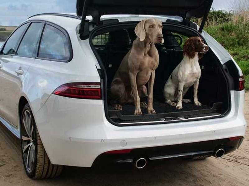 Deja que tu perro pase a la acción con los accesorios Jaguar Gear