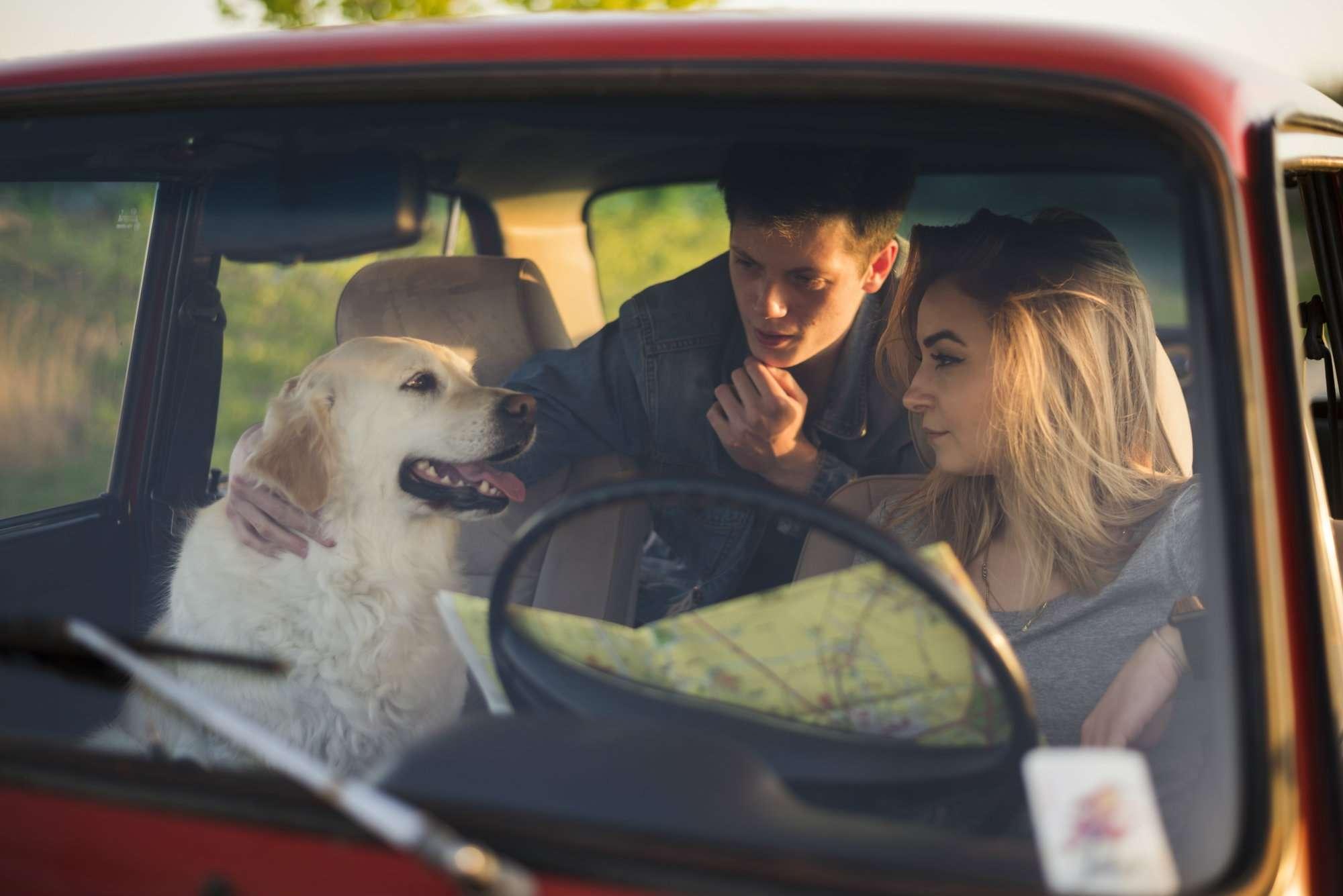 Consejos para viajar en coche con tu perro