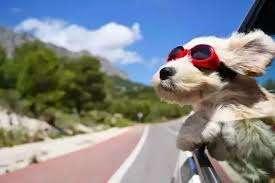 10 consejos para viajar con animales