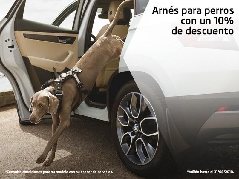 Arnés para perros con un 10% de descuento